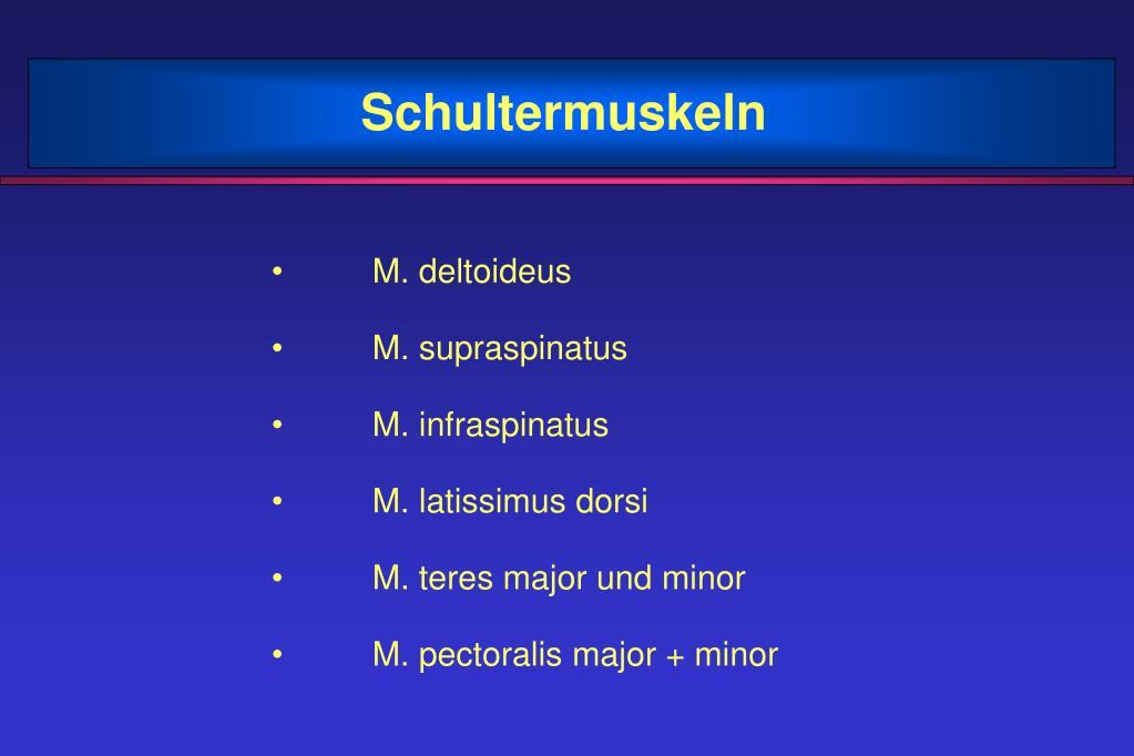 PPT - Schultermuskeln PowerPoint Presentation - ID:1365237