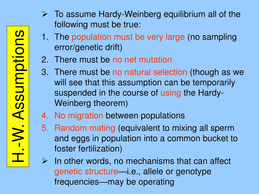 PPT - Hardy-Weinberg Theorem PowerPoint Presentation, free ...