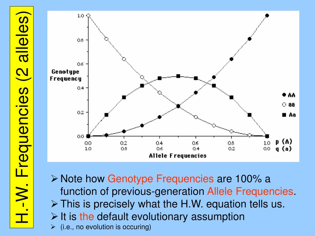 PPT - Hardy-Weinberg Theorem PowerPoint Presentation, free ...
