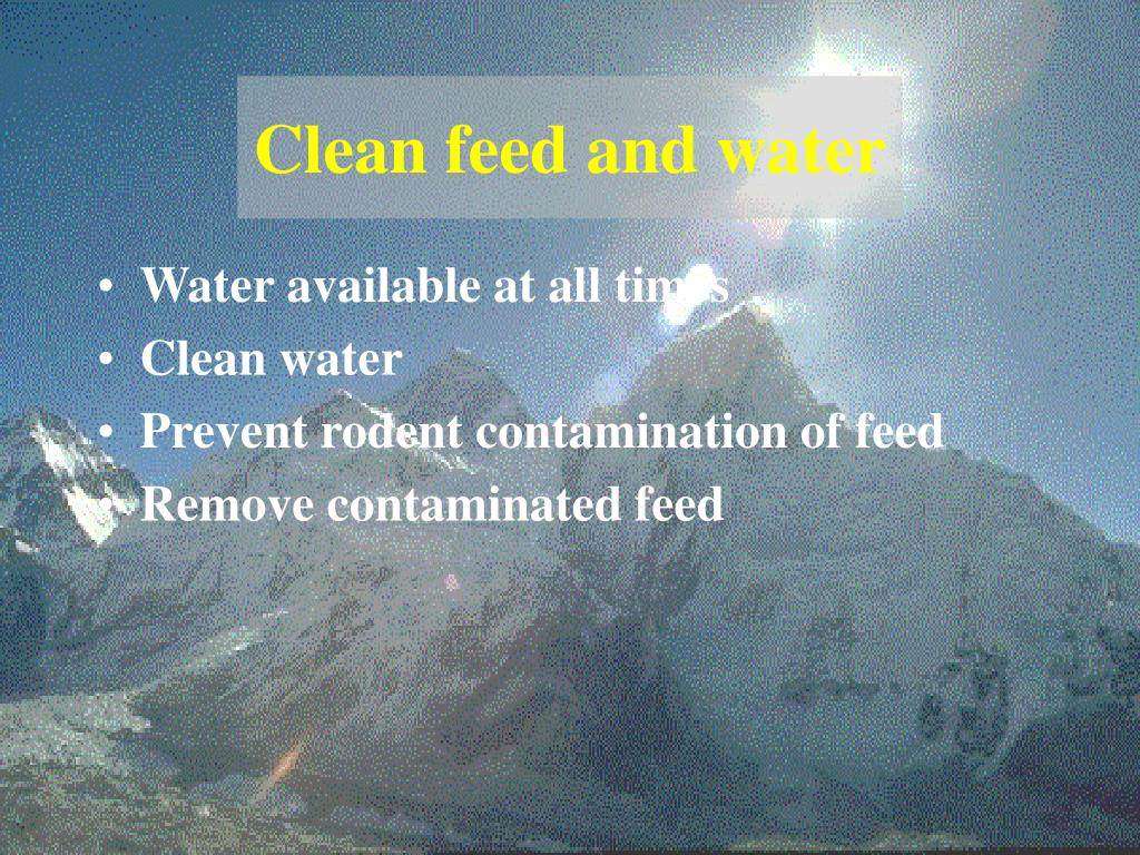 Clean feed and water