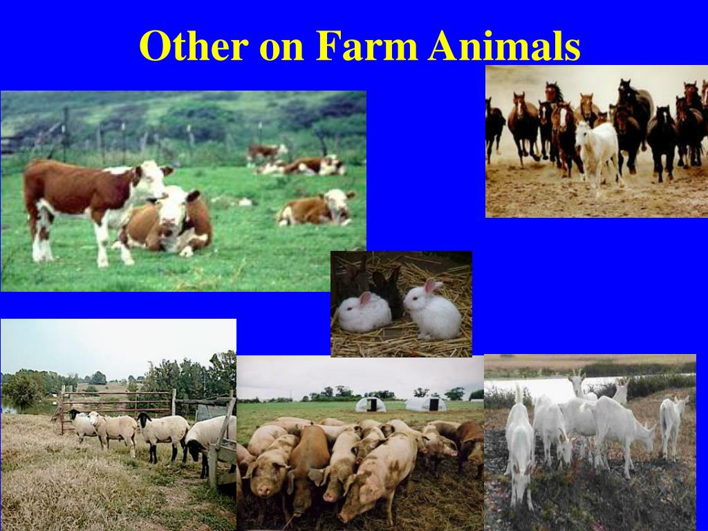 Other on Farm Animals