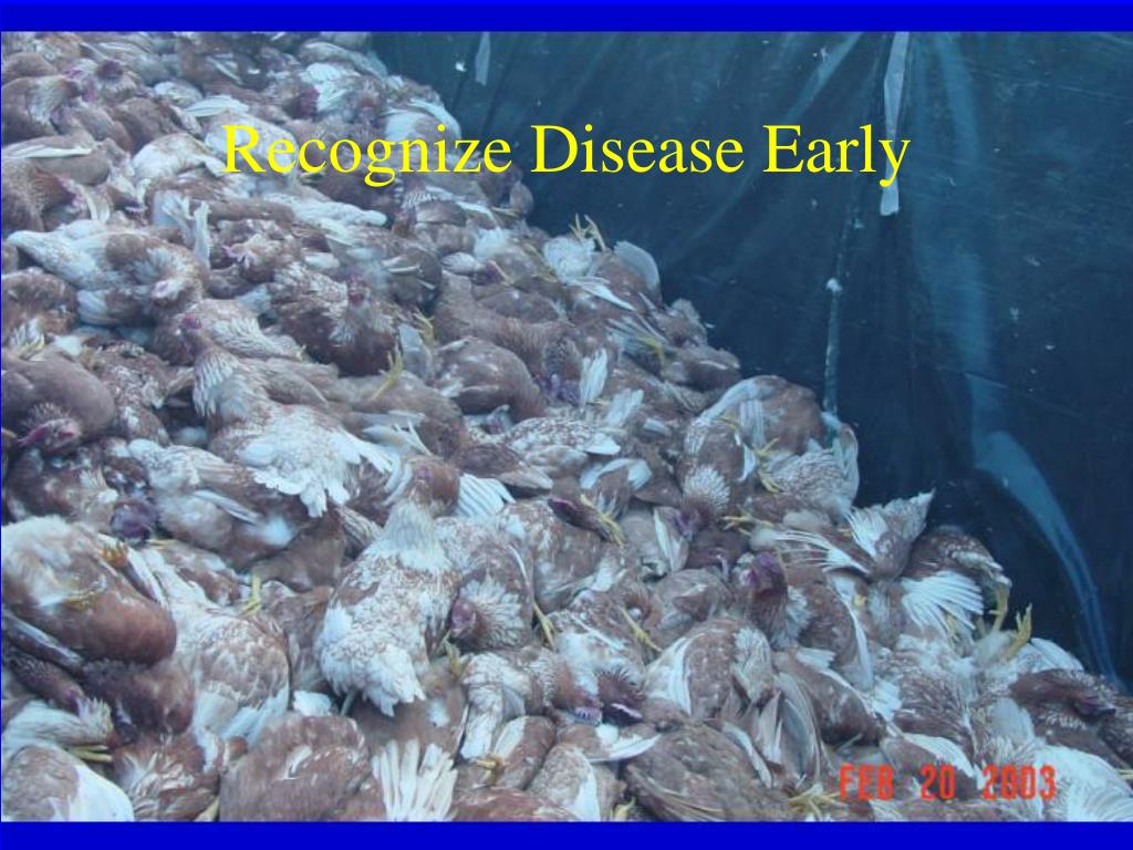 Recognize Disease Early