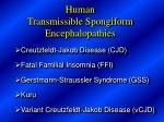 human transmissible spongiform encephalopathies