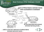 giant tortoises of the gal pagos islands