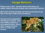 cougar behavior
