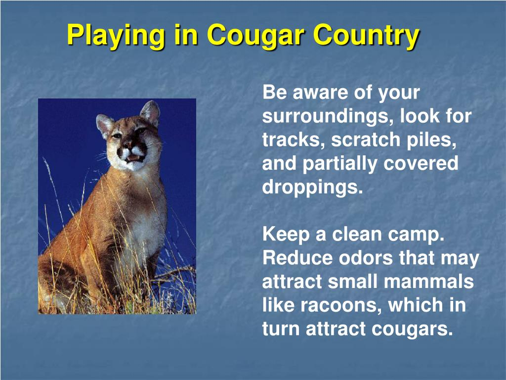 Playing in Cougar Country