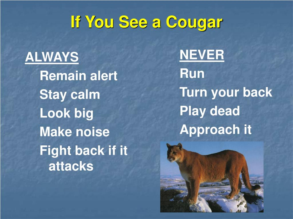 If You See a Cougar