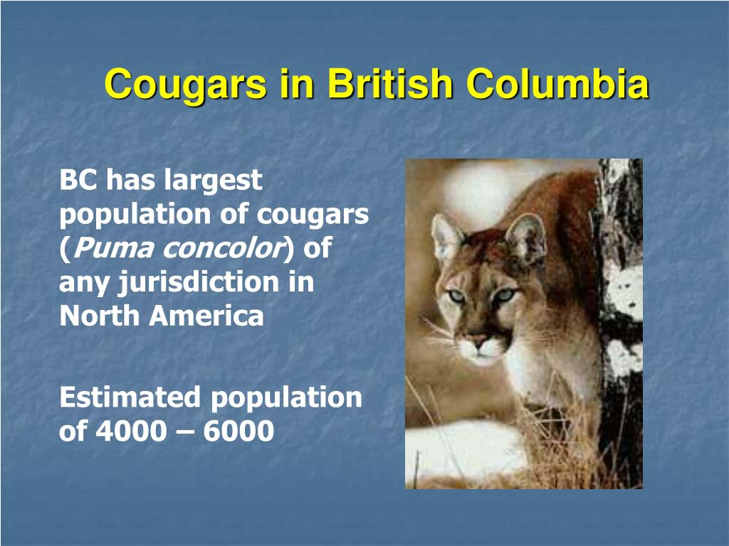 Cougars in British Columbia