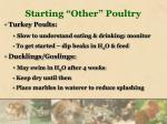 starting other poultry