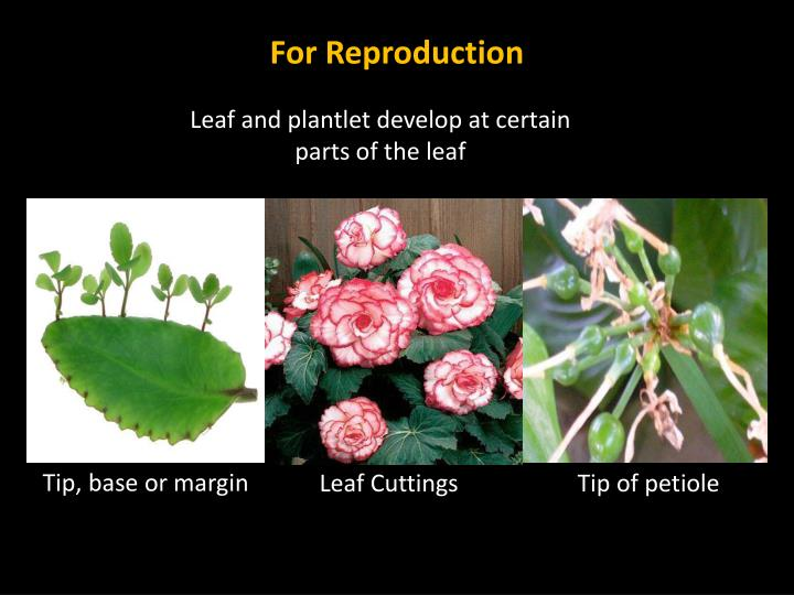 For Reproduction