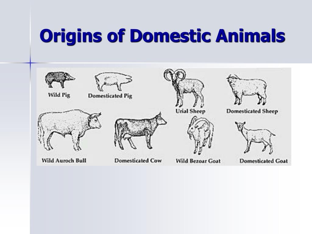 Origins of Domestic Animals