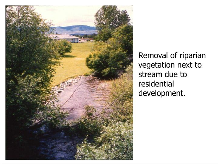 Removal of riparian
