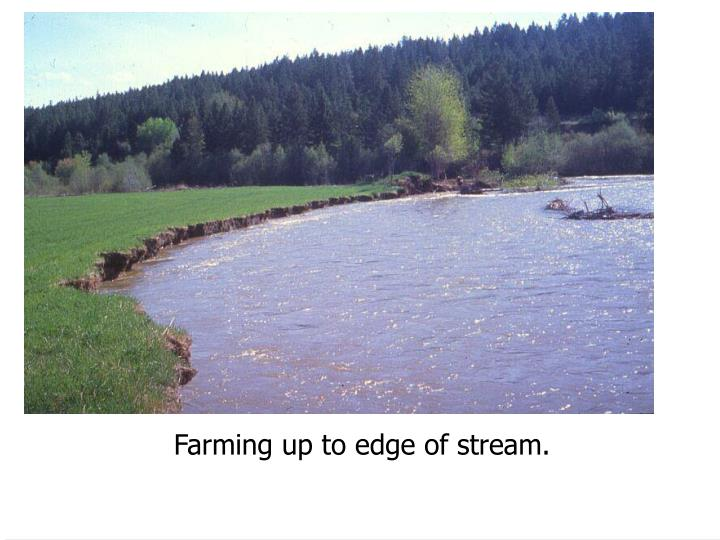 Farming up to edge of stream.