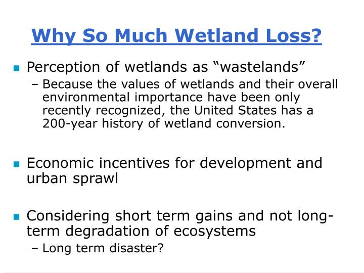 Why So Much Wetland Loss?