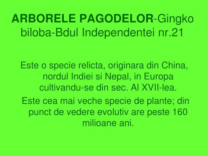 ARBORELE PAGODELOR