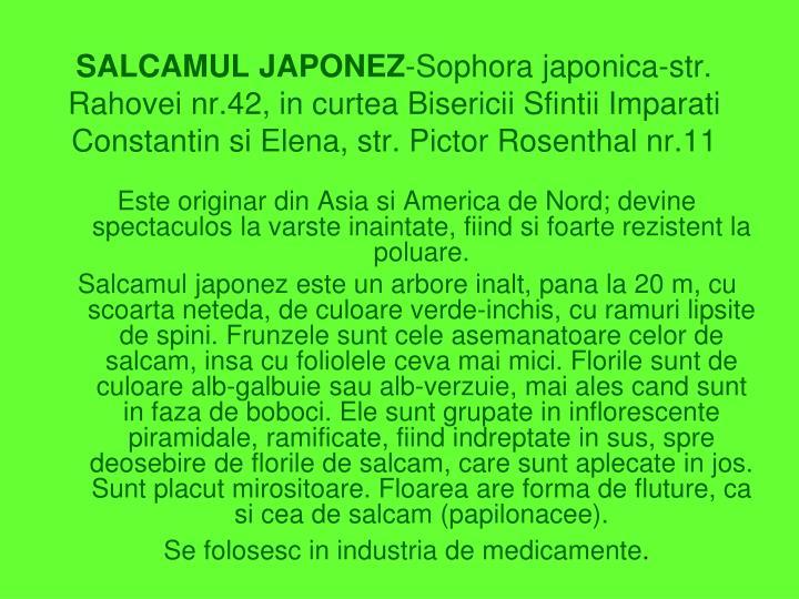 SALCAMUL JAPONEZ
