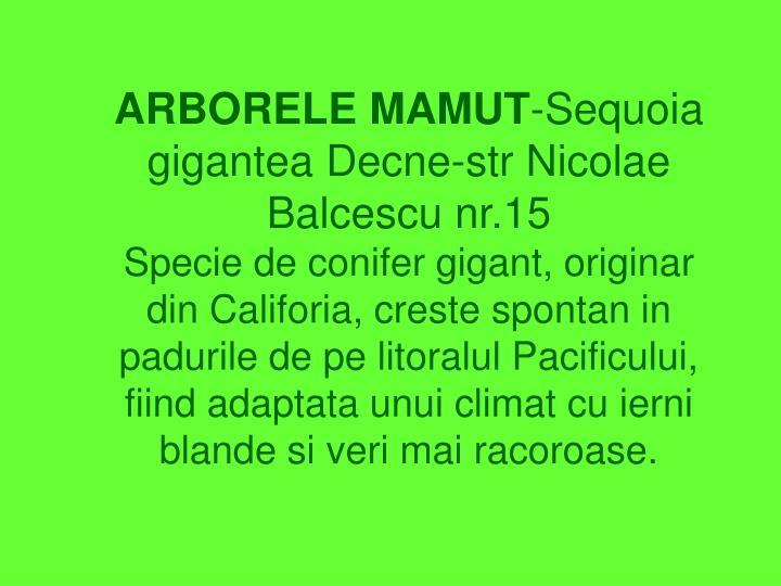 ARBORELE MAMUT