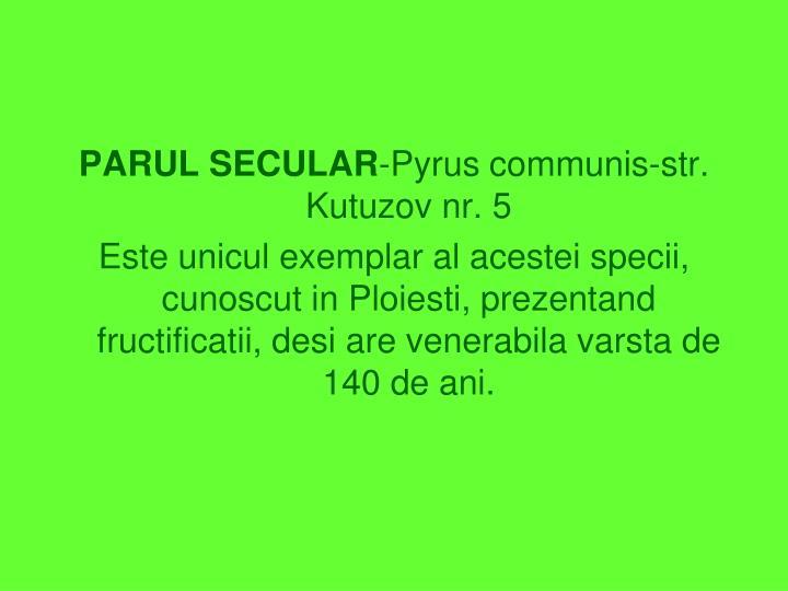 PARUL SECULAR