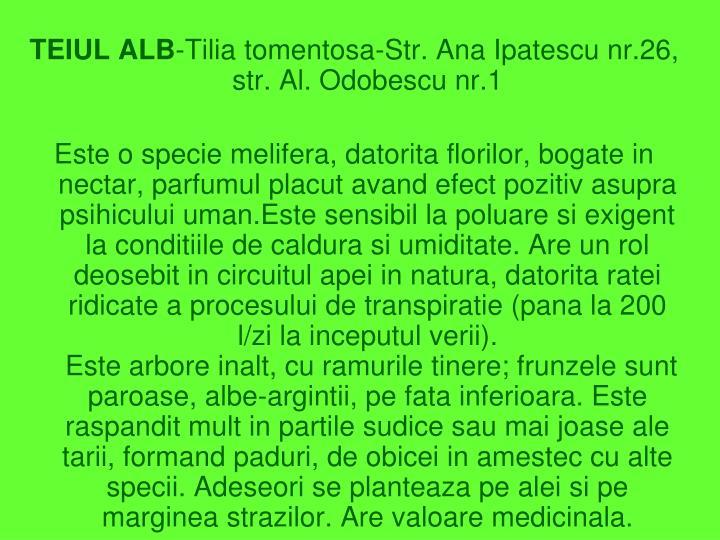 TEIUL ALB