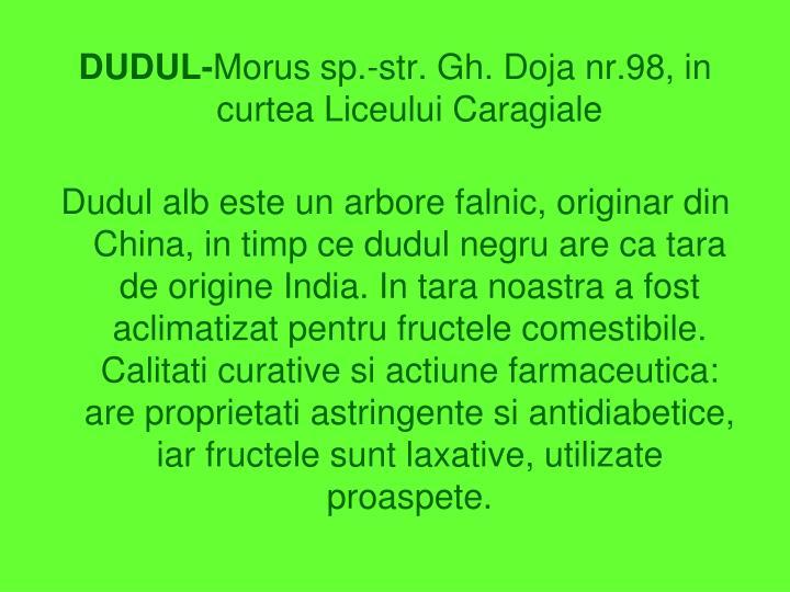 DUDUL-