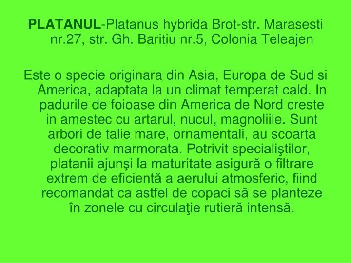 PLATANUL