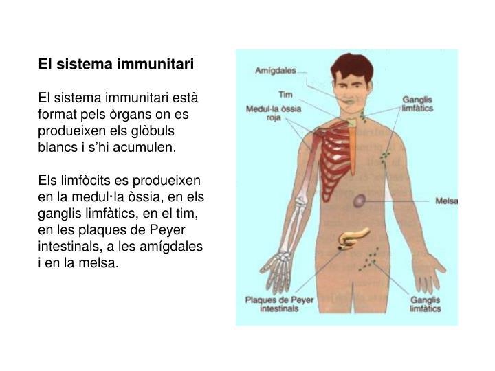 El sistema immunitari