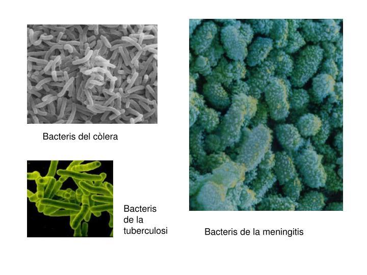 Bacteris del còlera