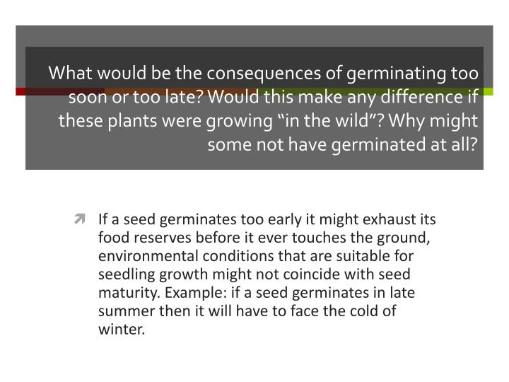 """What would be the consequences of germinating too soon or too late? Would this make any difference if these plants were growing """"in the wild""""? Why might some not have germinated at all?"""
