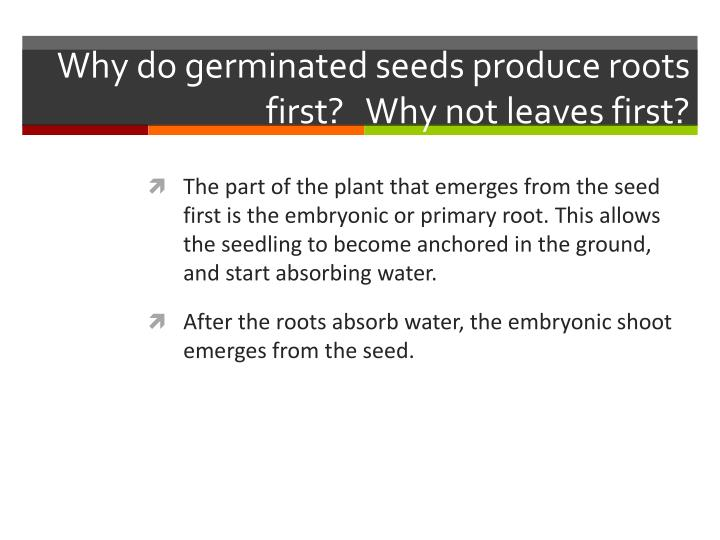 Why do germinated seeds produce roots first?