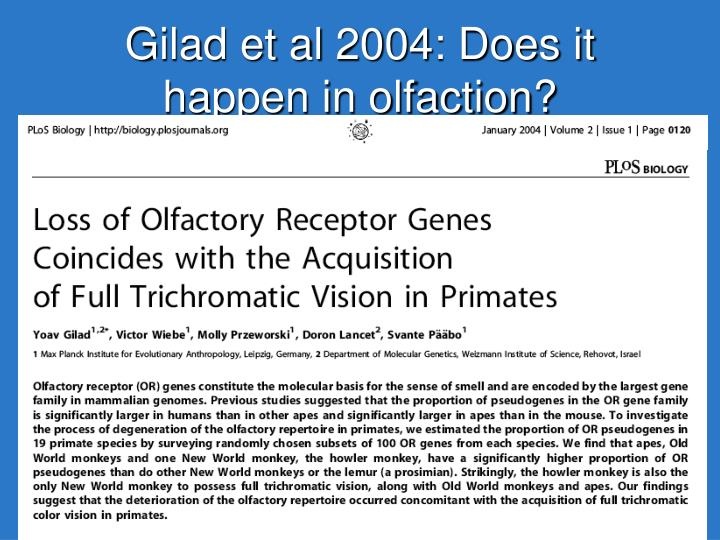 Gilad et al 2004: Does it happen in olfaction?