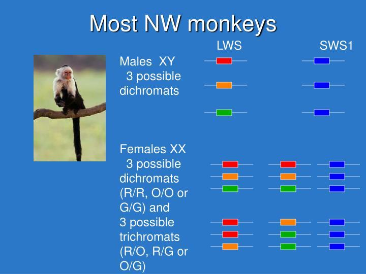 Most NW monkeys