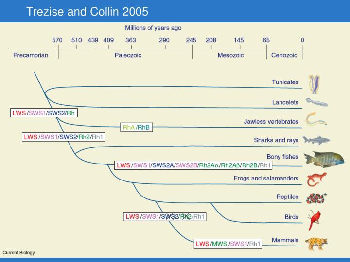 Trezise and Collin 2005