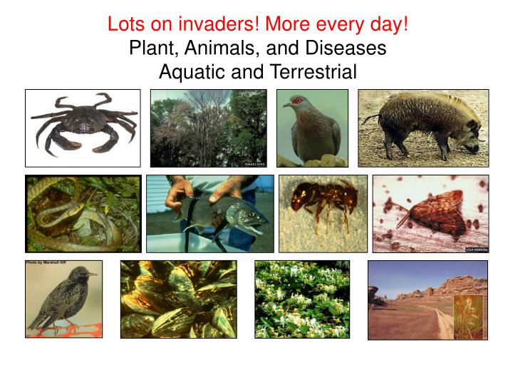 Lots on invaders! More every day!