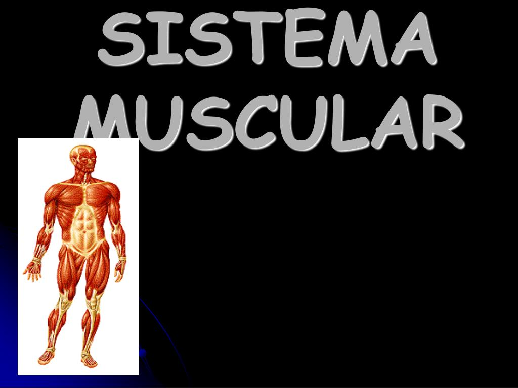 PPT - SISTEMA MUSCULAR PowerPoint Presentation - ID:1376112