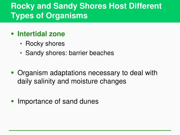 Rocky and Sandy Shores Host Different Types of Organisms