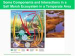 some components and interactions in a salt marsh ecosystem in a temperate area