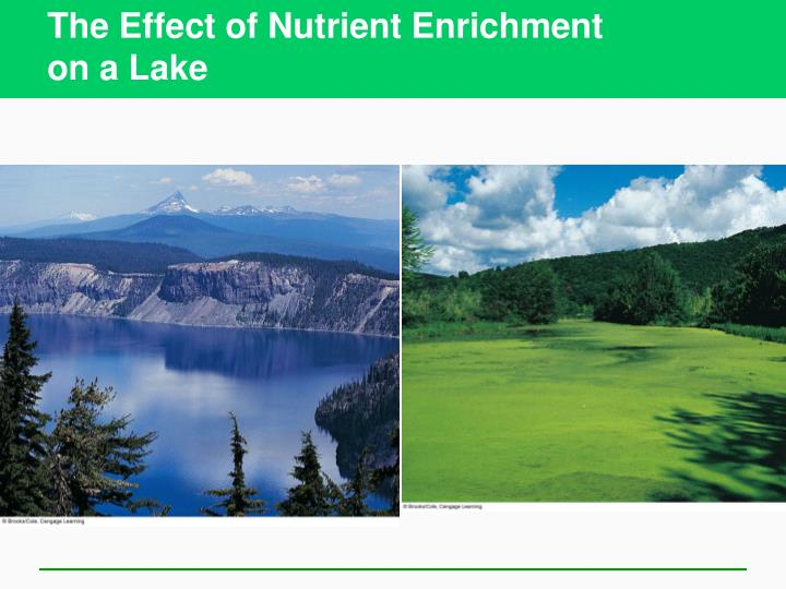 The Effect of Nutrient Enrichment