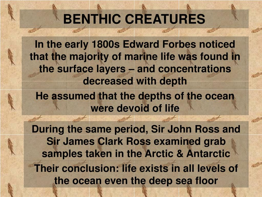 BENTHIC CREATURES