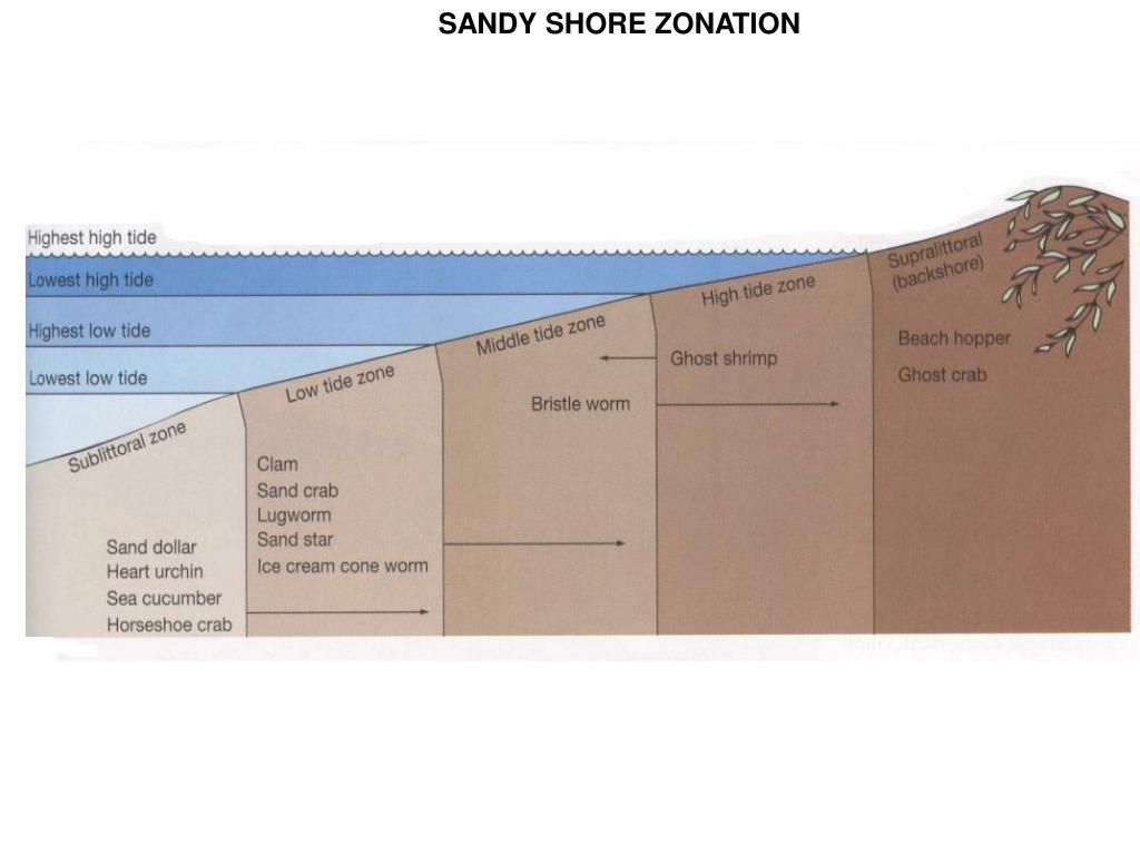 SANDY SHORE ZONATION