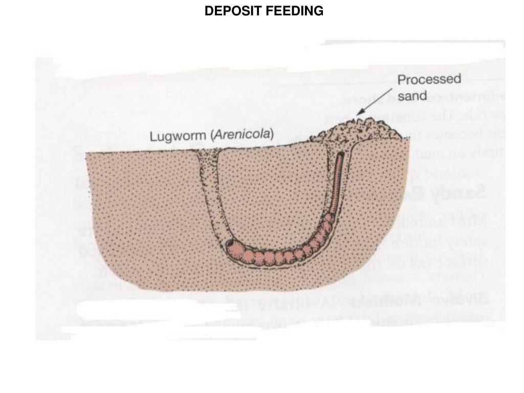 DEPOSIT FEEDING