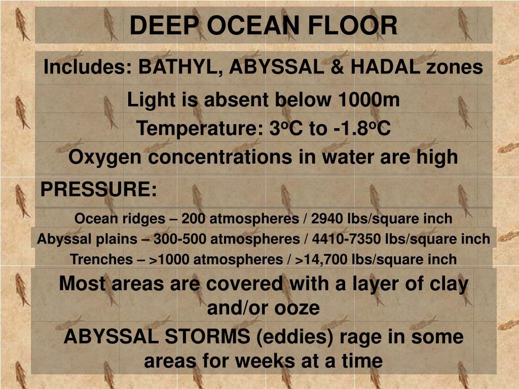 DEEP OCEAN FLOOR