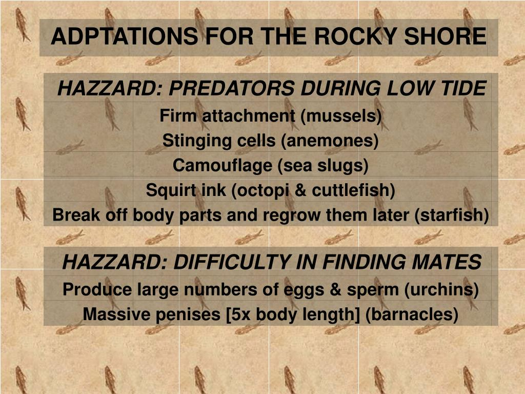 ADPTATIONS FOR THE ROCKY SHORE