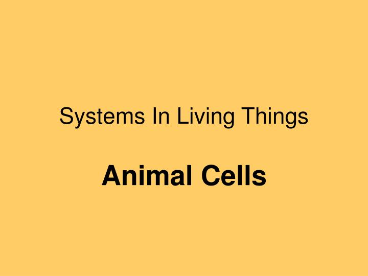 systems in living things n.