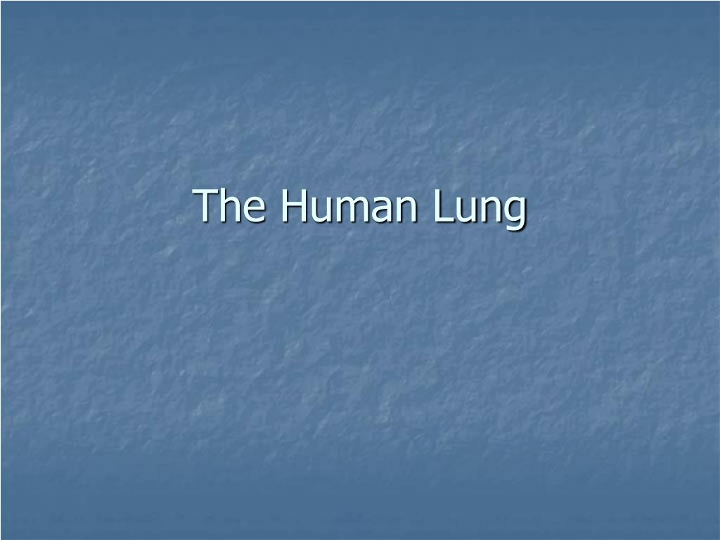 the human lung l.