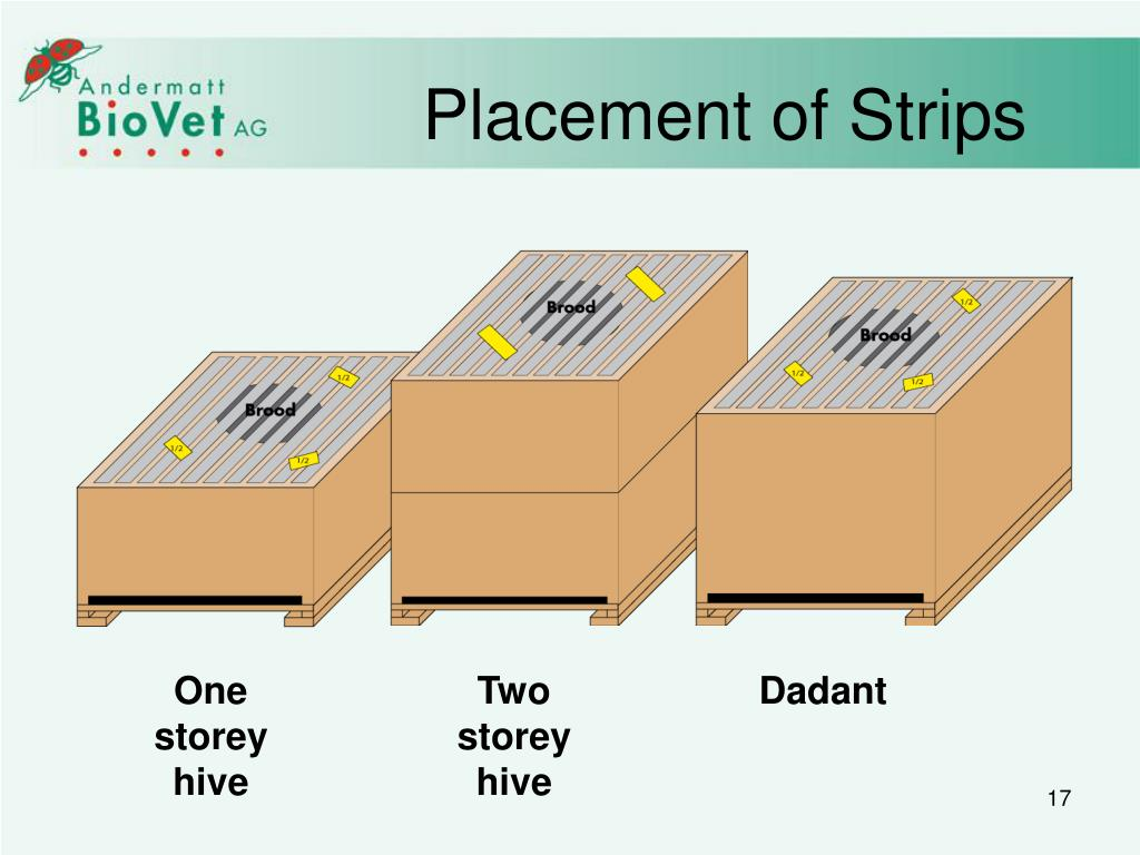 Placement of Strips