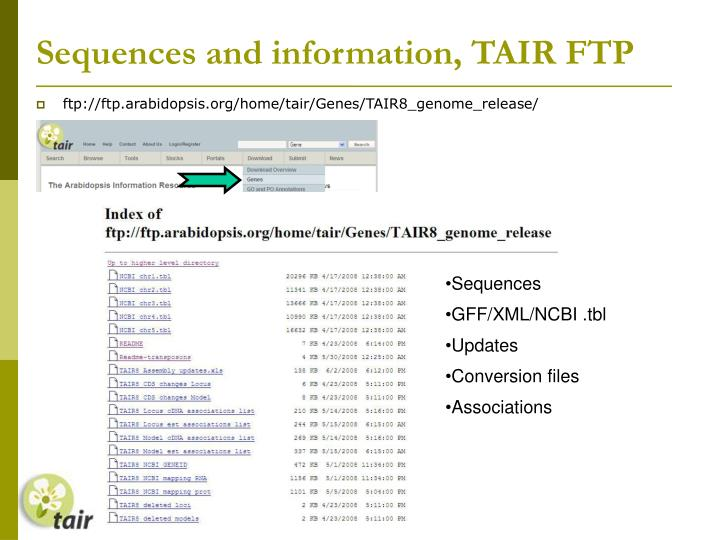 Sequences and information, TAIR FTP
