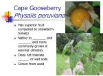 cape gooseberry physalis peruviana
