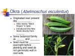 okra abelmoschus esculentus