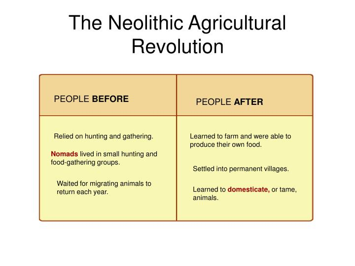 the neolithic agricultural revolution n.