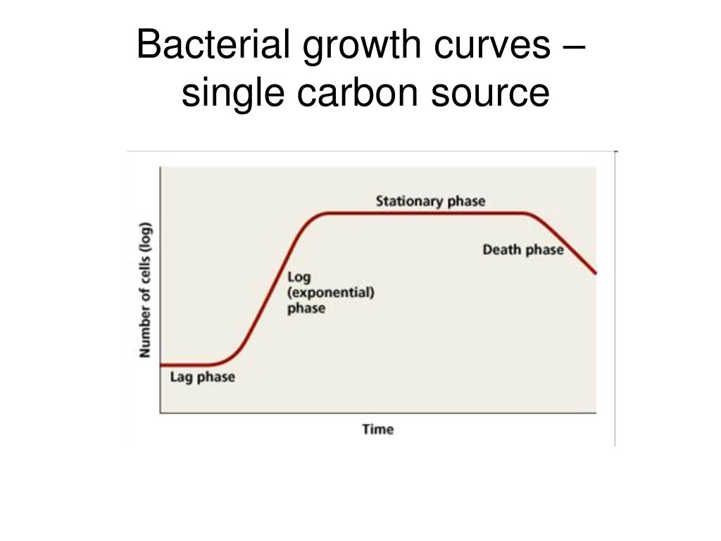 Bacterial growth curves –
